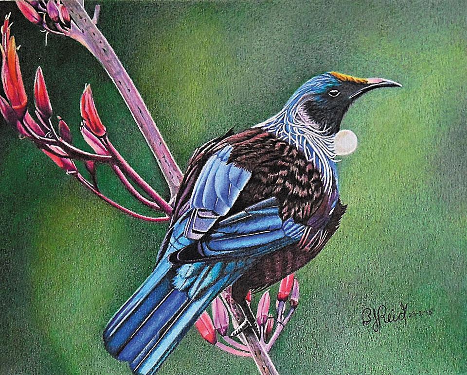 Beverly Reid - Aotearoa Artist